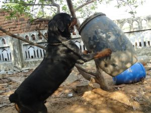 Canine psychology-( Food Aggression,Howling,Biting )